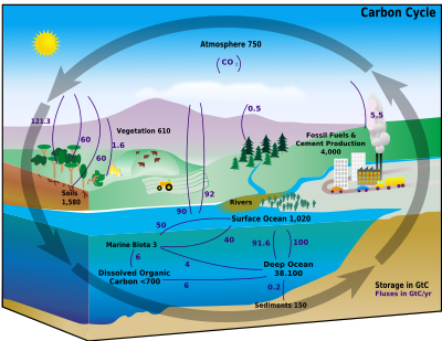 [carboncyclewiki]